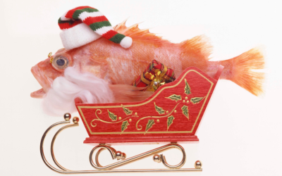Fish at Christmas…
